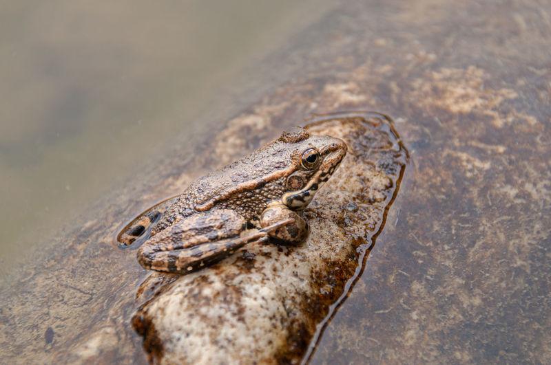 High angle view of frog on a lake