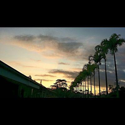 Sunrise Clouds Trees WorkTime Humpday Islandlife Hawaiianpride Instapict Nofilter 808love Bigislandlove Beautifulxhi Luckywelivehawaii