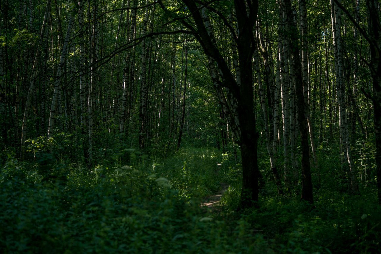 forest, nature, green, tranquility, tree, day, no people, beauty in nature, outdoors