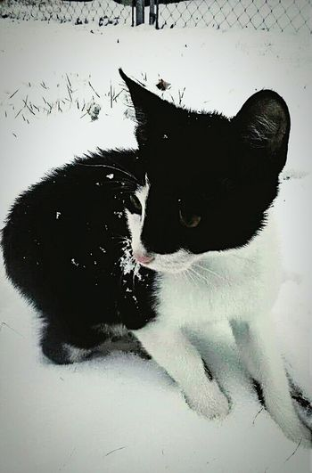 Kitty!  Baby Kitten Kittysfirstsnow Lovelovelove Kitty Cuddles