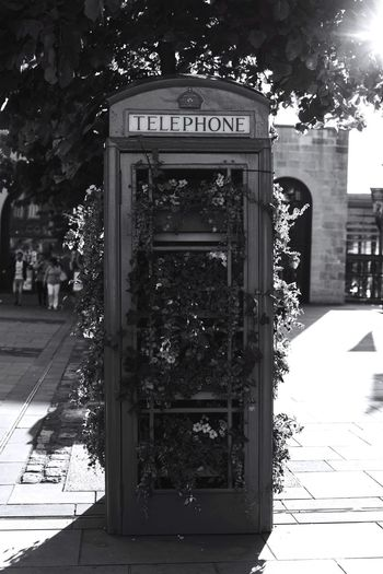 Telephone box in BathOutdoors Tree Shadow Communication Built Structure Architecture No People Day Building Exterior City Sky Bnw Focus On Foreground Monochrome Photography BW_photography Monochrome Blooming Freshness Close-up Beauty In Nature Telephone Booth Redphonebox Uk Flowers, Nature And Beauty Flowers Stories From The City