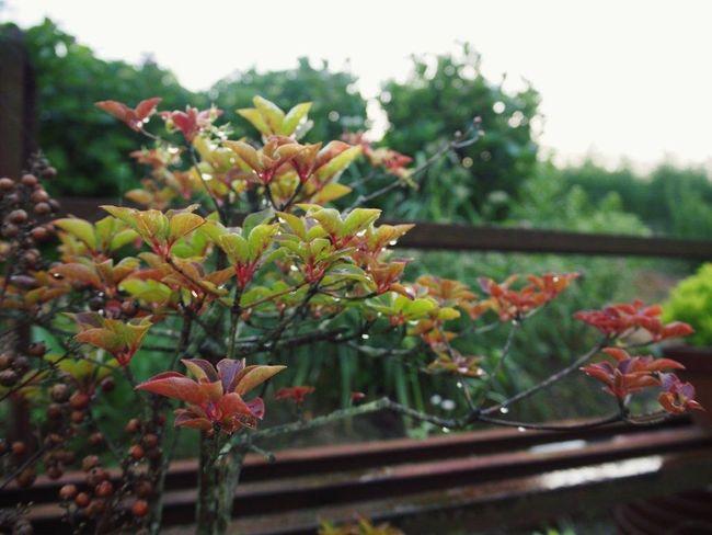 雨の日はお出掛けの日、幼い頃からの習慣、遠い記憶。 雨 雫