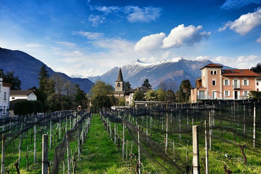 Villa Dei Cedri Bellinzona Ticino Switzerland Landscape_Collection Mountains Vineyard Merlot