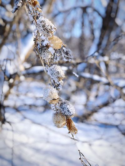 Close-up of frozen plant on land