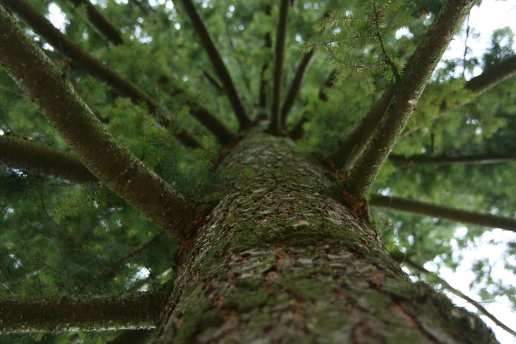 Low angle view of tree
