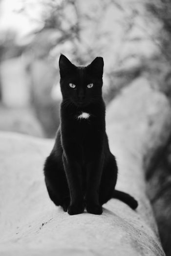 Kitty Pets Portrait Domestic Cat Looking At Camera One Animal Cat Neko Black Color Four Legs And A Tail Black Cat Domestic Animals Feline Cat Watching