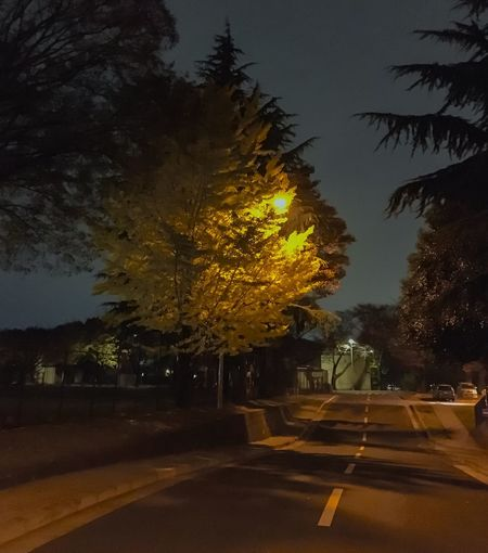 30 Day Challenge Day Four Trees Tree Outdoors Night Road Sky Nature The Way Forward Yellow Transportation No People Illuminated Growth Scenics Beauty In Nature Japan Photography Japan Nature Yokota Air Base Ginkgo Tree
