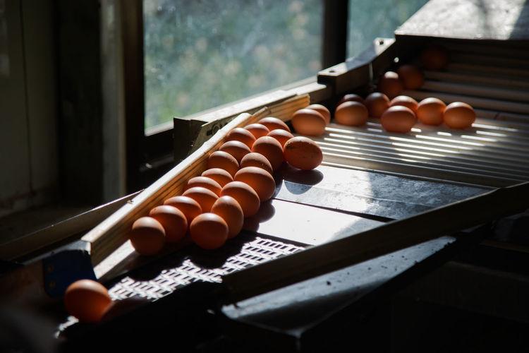 Many eggs on egg sorter machine