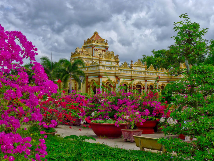 Architecture Beauty In Nature Buddhist Temple Building Exterior Built Structure Cloud - Sky Day Flower Fragility Growth Nature No People Outdoors Plant Sky Travel Destinations Tree Vinh Trang Pagoda