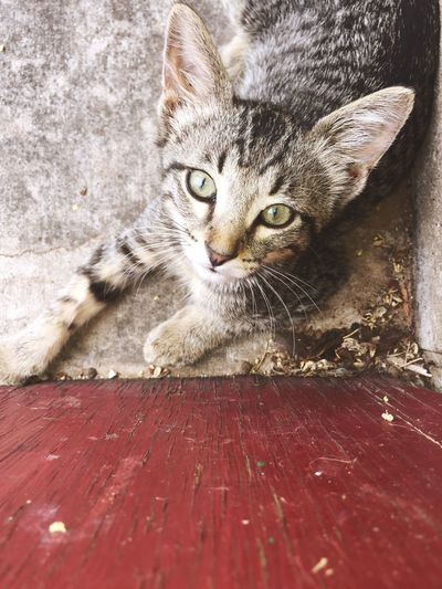 Lazy Saturday's FirstEyeEmPic Pictureoftheday Wood Art Chipped Paint Concrete Woodstep Kitten Kittenoftheday IPhone IPhoneography Eyes Kitten Eyes First Eyeem Photo