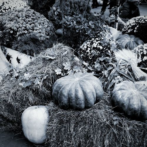 Halloween Autumn Holiday Beauty Around Us Plants Pumpkin Festival Pumpkin October Trick Or Treat