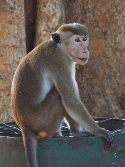 Monkey sitting on wall