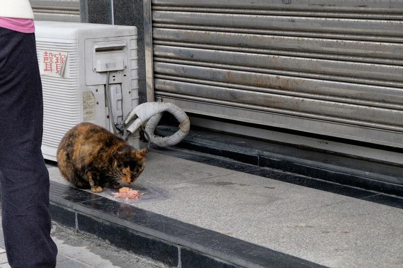 Cat feeding on food outside shop