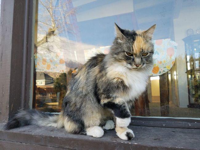 EyeEm Selects Domestic Cat Pets Domestic Animals Animal Themes Feline Cat Photography Cat♡