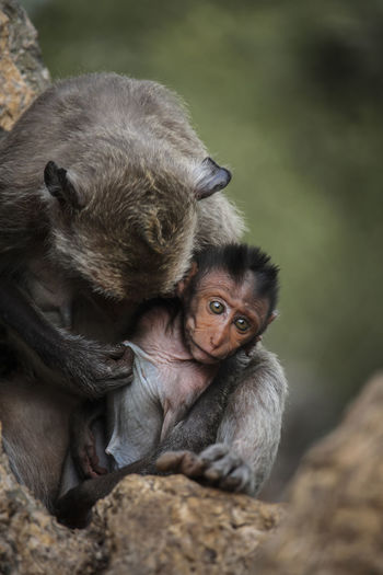 mother with children, animals, innocence, commitment, caring, ties, monkeys
