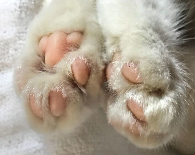 Paws Pink Paws
