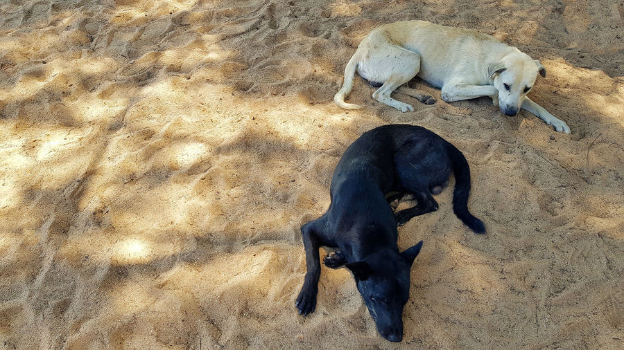 High angle view of dogs relaxing on sand
