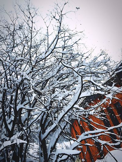 Snow Tree Branches Enjoying Life Week End Landscape #Nature #photography