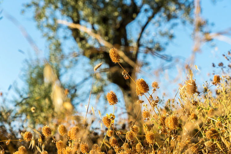 Nature Plants Summer Italy Tuscany Plant Animals In The Wild Animal Animal Themes Animal Wildlife Beauty In Nature Growth One Animal Day Sky No People Low Angle View Sunlight Bee Land Flying Invertebrate Insect Selective Focus Outdoors Flower Head
