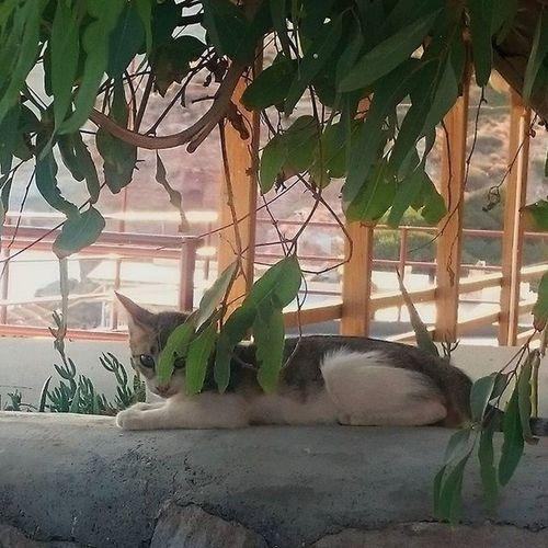 RELAX AFTER SUN. CAT IN PALEOCHORI BEACH, MILOS. 6.05 pm Cat Catofgreece Catoftheday Enjoy Paleochoribeach Milos Ilovemilos Greekholidays Greecestagram Greece Grecia Cyclades_islands Cyclades Cicladi Cats Gatti