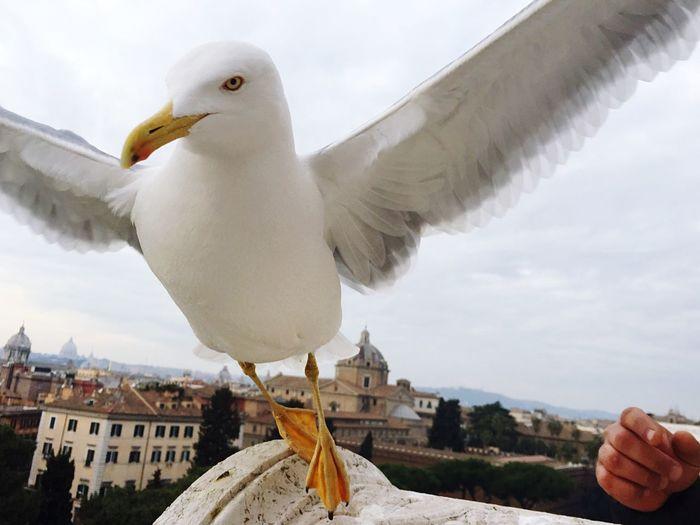 Un gabbiano in quel di Roma! 🕊 First Eyeem Photo