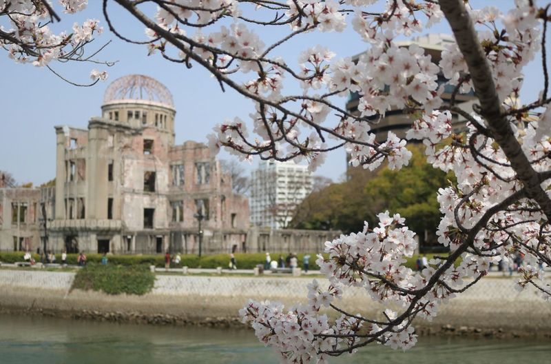 View of cherry blossom tree with atomic  bomb dome building in background