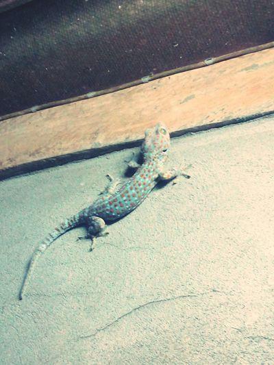 Gecko Cute. ^____^ Zoo Thailand Hello World Enjoying Life Gecko Chanthaburi Chanthaburi's Sky Chanthaburi Thailand Hi! Funnyface EyeEm Geckos