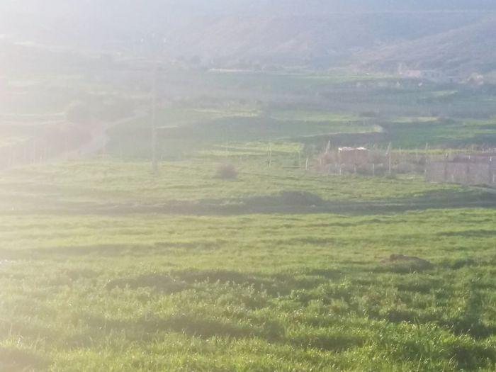 Rural Scene Agriculture Field Backgrounds Meadow Fog Grass Landscape Sky