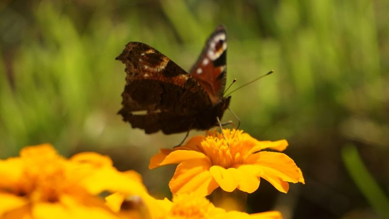 Batterfly  September Russian Nature Autumn Very Beautiful NiceShot Осень 🍁🍂 бабочка красота