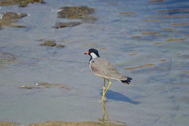 Bird Water Animal Wildlife Animals In The Wild No People Nature Day