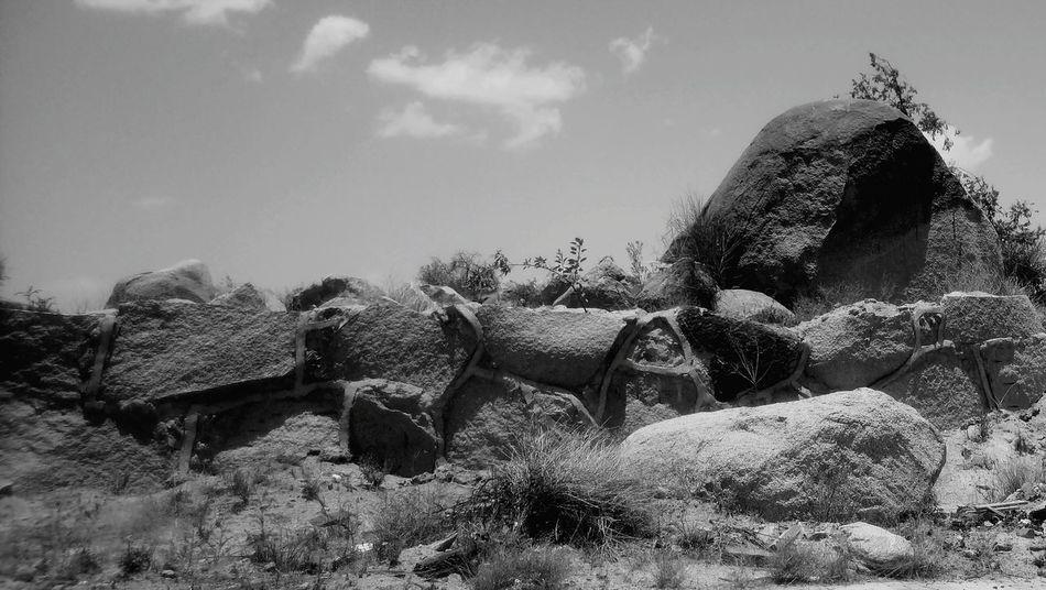 Rock Formation Deserts Around The World Mountain Rocks Tree Sky Plant Life