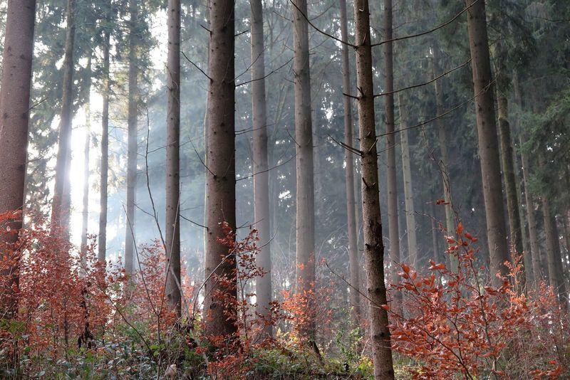 Forest Photography Beautiful Nature Trees And Sun Sunraises Wintertime Switzerland Sunshine Day