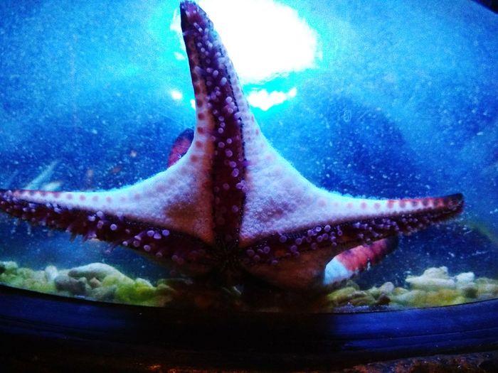 Etoile de mer UnderSea étoile De Mer UnderSea Water Sea Life Underwater Swimming Fish Close-up