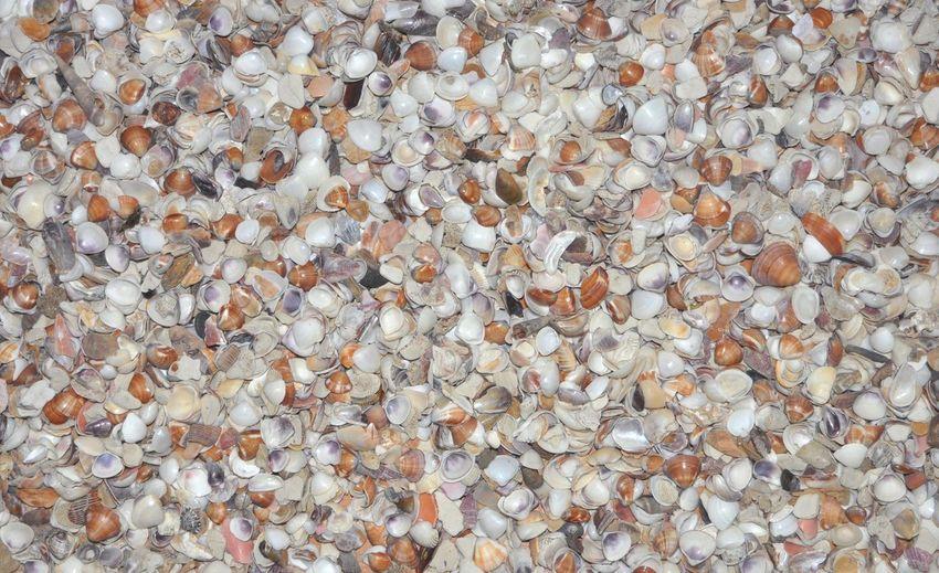 High angle view of shells on stones
