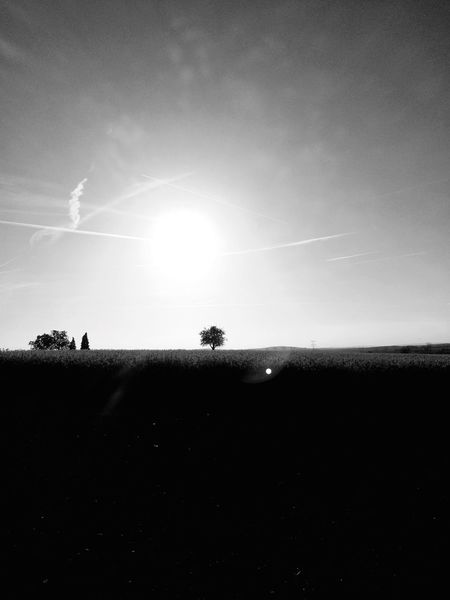 Nature Blackandwhite PhotographesAA Spotlight InTheRoad Tree And Sky