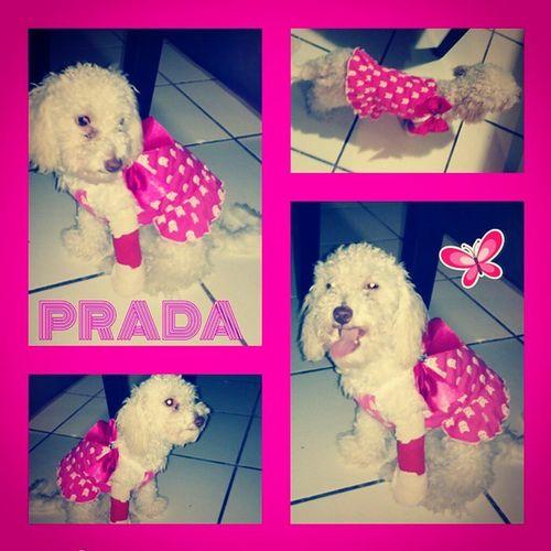 Prada Pretty N Pink PPP