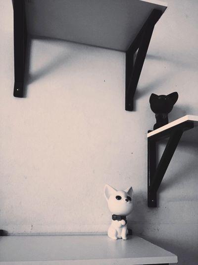 Cats fake