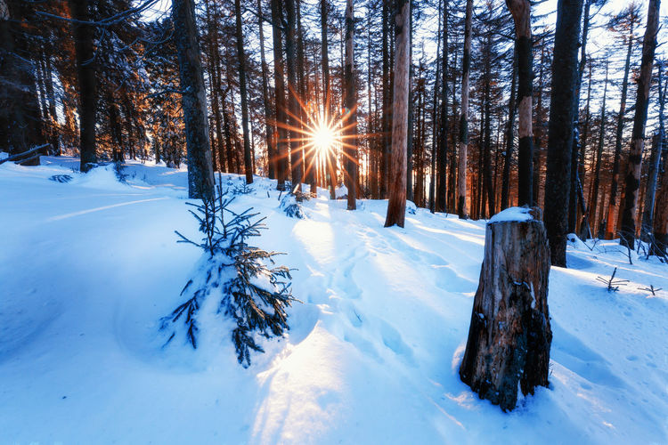 Snow Cold Temperature Winter Tree Plant Tranquility Land Beauty In Nature Tranquil Scene Covering Nature Scenics - Nature White Color Forest No People Tree Trunk Trunk Sunlight Non-urban Scene Sun