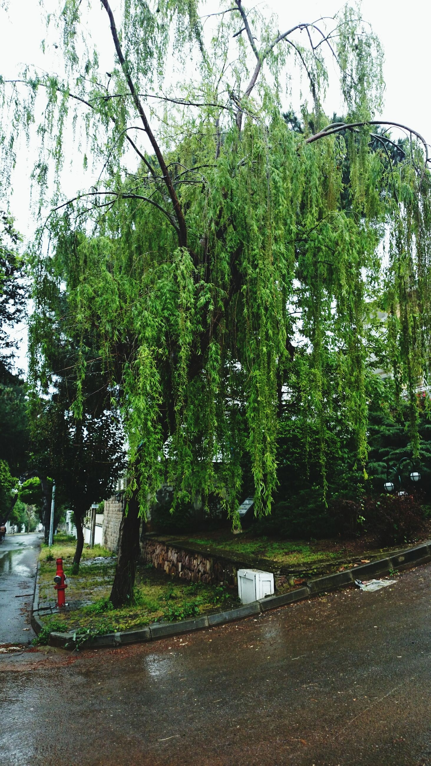 tree, growth, green color, nature, plant, road, water, tranquility, sky, beauty in nature, park - man made space, branch, day, street, tranquil scene, built structure, outdoors, clear sky, growing, transportation