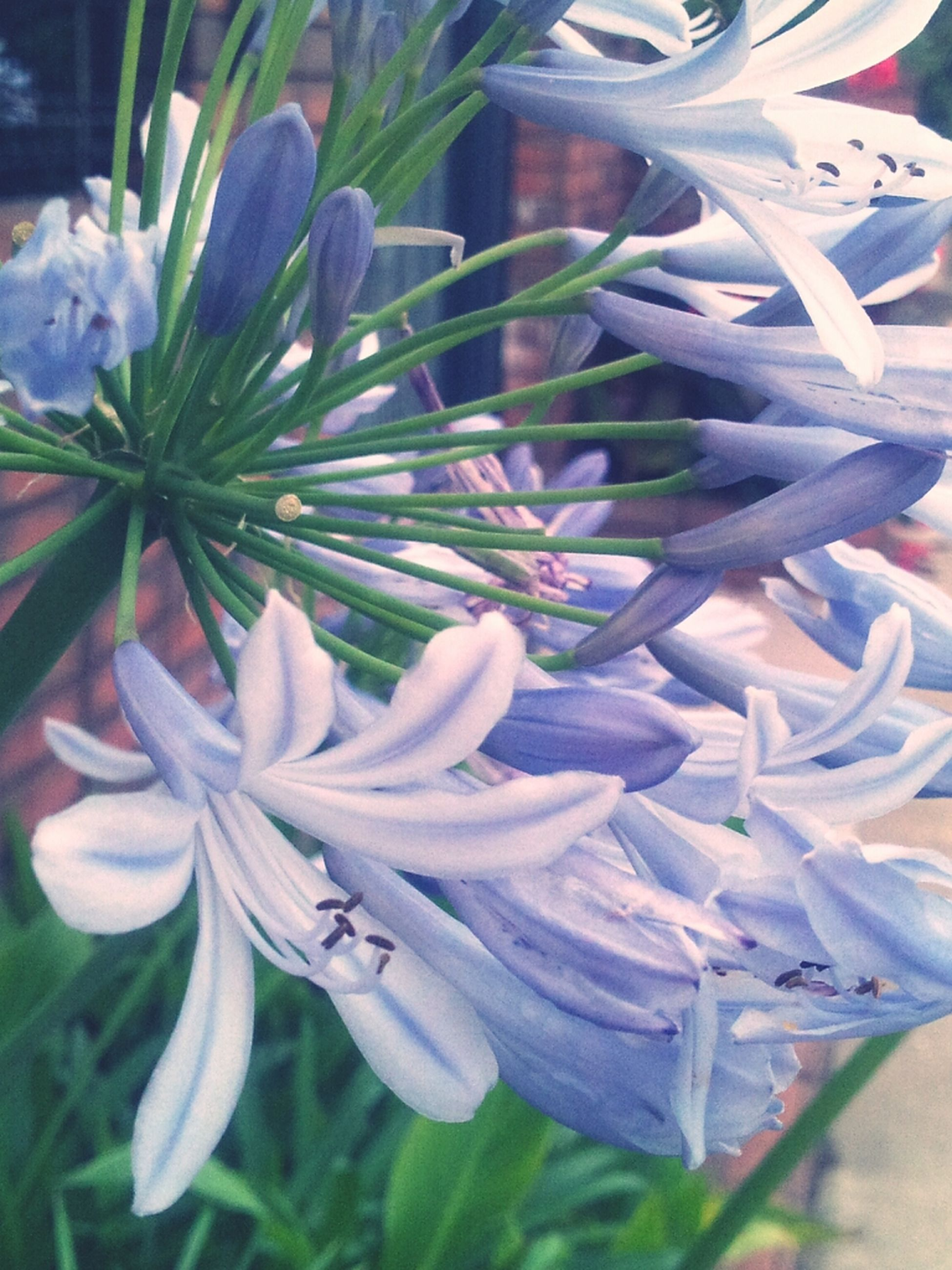 flower, petal, fragility, freshness, flower head, growth, beauty in nature, plant, close-up, blooming, nature, white color, focus on foreground, in bloom, purple, leaf, no people, park - man made space, day, stem