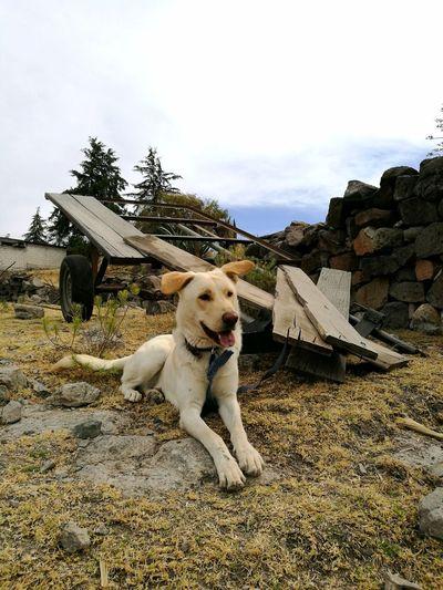 🐶 😜 El tremendo Koby 😜 🐶 Cool Dog Michoacan Dog Pets Domestic Animals One Animal