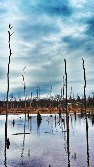 Check This Out Enjoying Life Swamp EyeEm Nature Lover Dead Lands Trees And Water EyeEm Outdoors