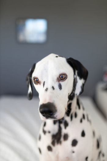EyeEmNewHere EyeEm Selects EyeEm Best Shots Eye4photography  EyeEm Gallery EyeEmBestPics EyeEm Masterclass Eyeem Market Doggy Eyeempets Beagle Close-up Canine Animal Nose
