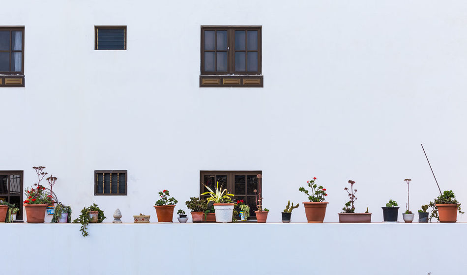 Potted plants in Lanzarote Architecture Architecture Building Exterior Day Fine Art Flower Front View Geometrical Growth Happy Lanzarote Life LINE Nature Outdoors Plant Potted Plant Pure Row Row Of Things White White Background Window Window Box