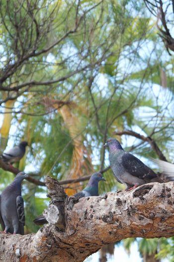 Branch Bird Low