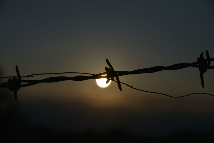 Sunset Barbed