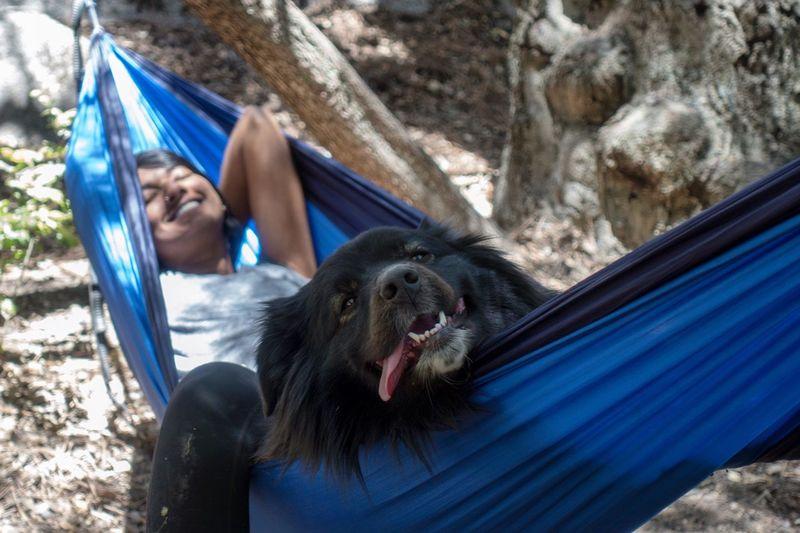 Portrait of dog relaxing on hammock