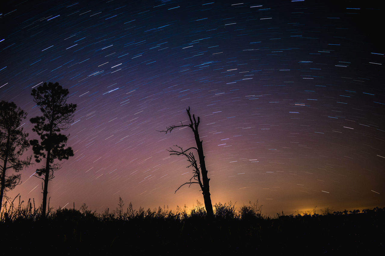 SILHOUETTE TREES AGAINST STAR FIELD AGAINST SKY AT NIGHT
