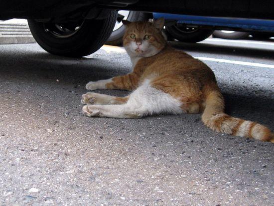 Stray Cat Cat Car Animals