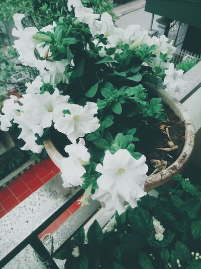 Flower White Color Nature Fragility Freshness Growth Beauty In Nature Leaf No People Flower Head Day Plant Outdoors Blooming Close-up Green Color